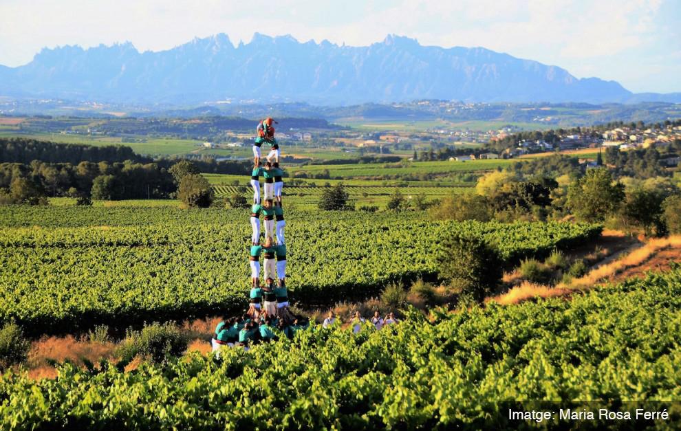 L'Alt Penedès: Un entorn rural entre vinyes per descobrir
