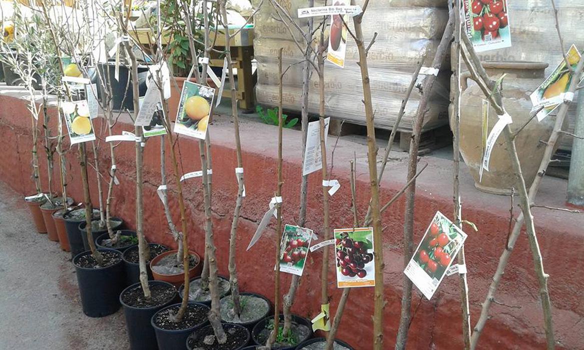 calderi-arbres-fruites