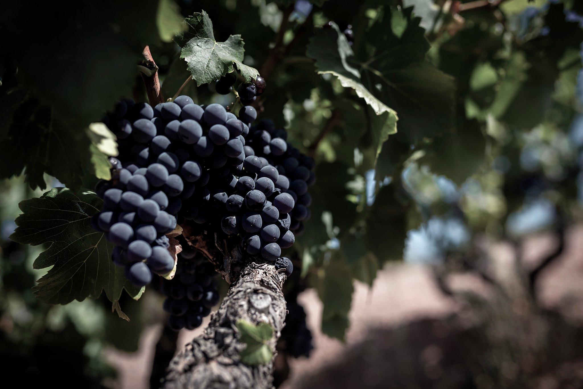 Vins i Caves Tarragona