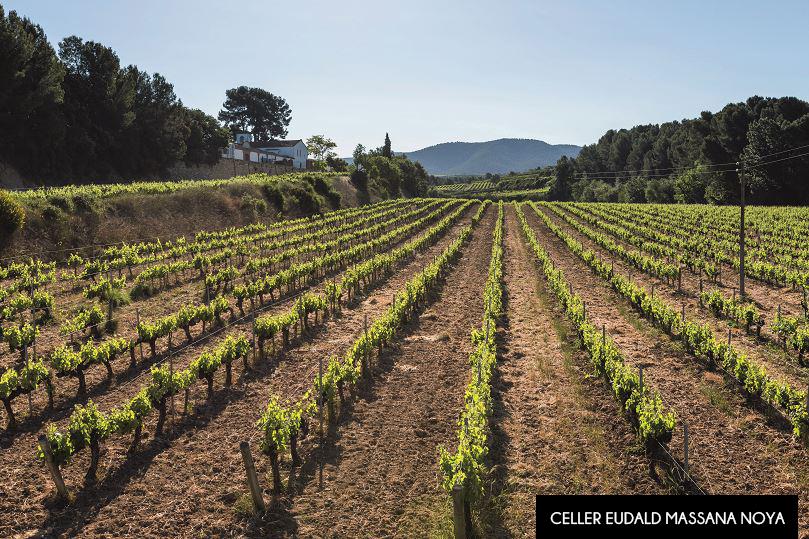 Descobrim els cellers, vins i caves de Barcelona!