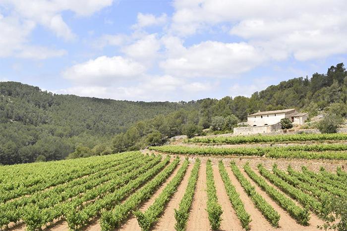 Puig-Batet vins