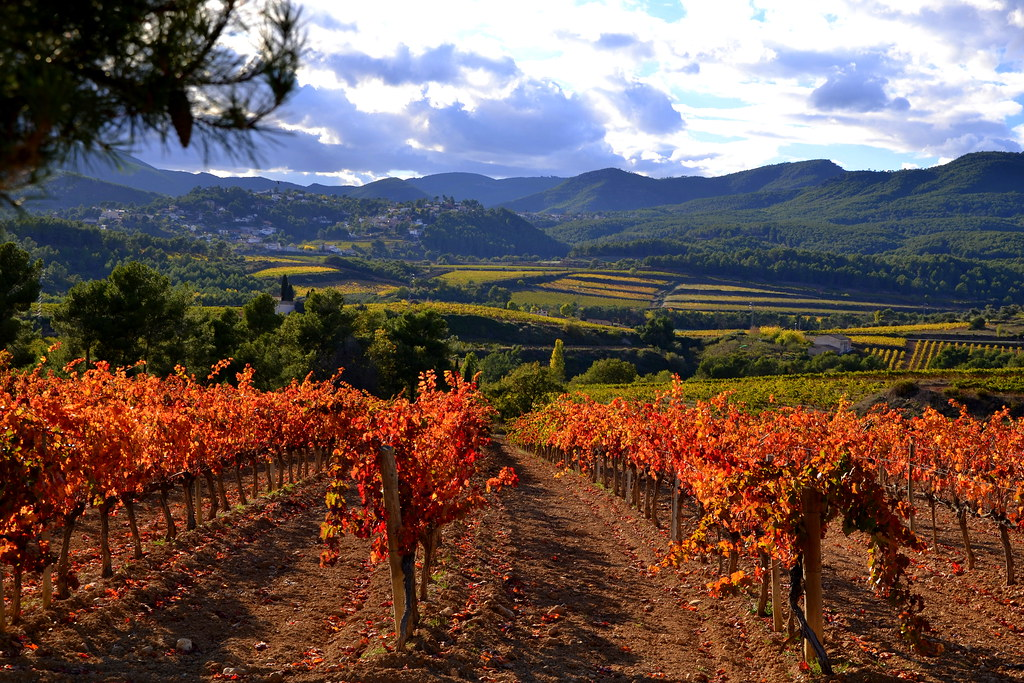 Vins, Cellers i Caves Catalans!