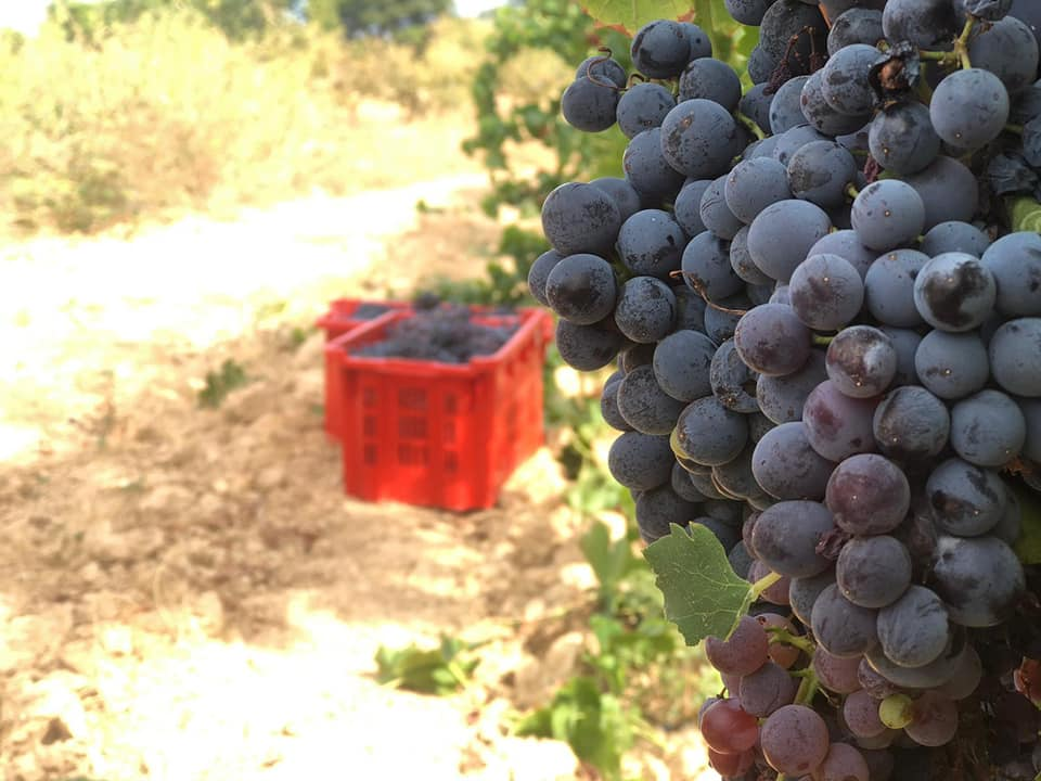 Petits Productors, grans vins i caves catalans🍇🍷